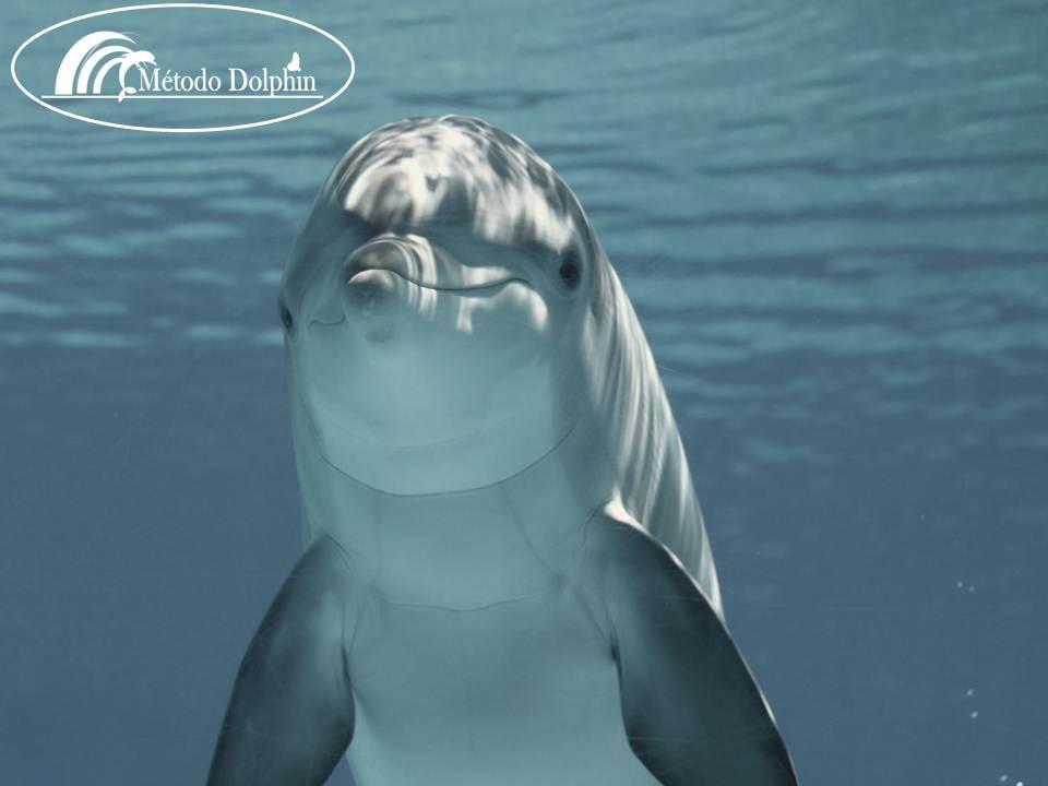 metodo dolphin 1